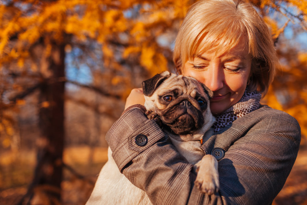 Woman walking pug dog in autumn park. Happy lady hugging pet. Best friends spend time together